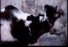 016 - Bluebell - 2002