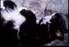 017 - Bluebell - 2002